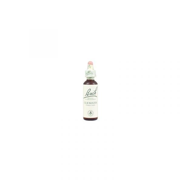 Bílá lesní réva – Clematis