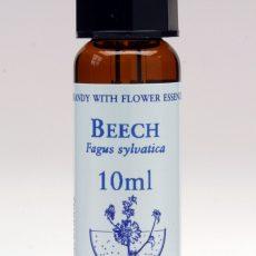 Buk lesní – Beech