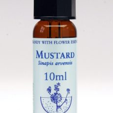 Divoká hořčice – Mustard